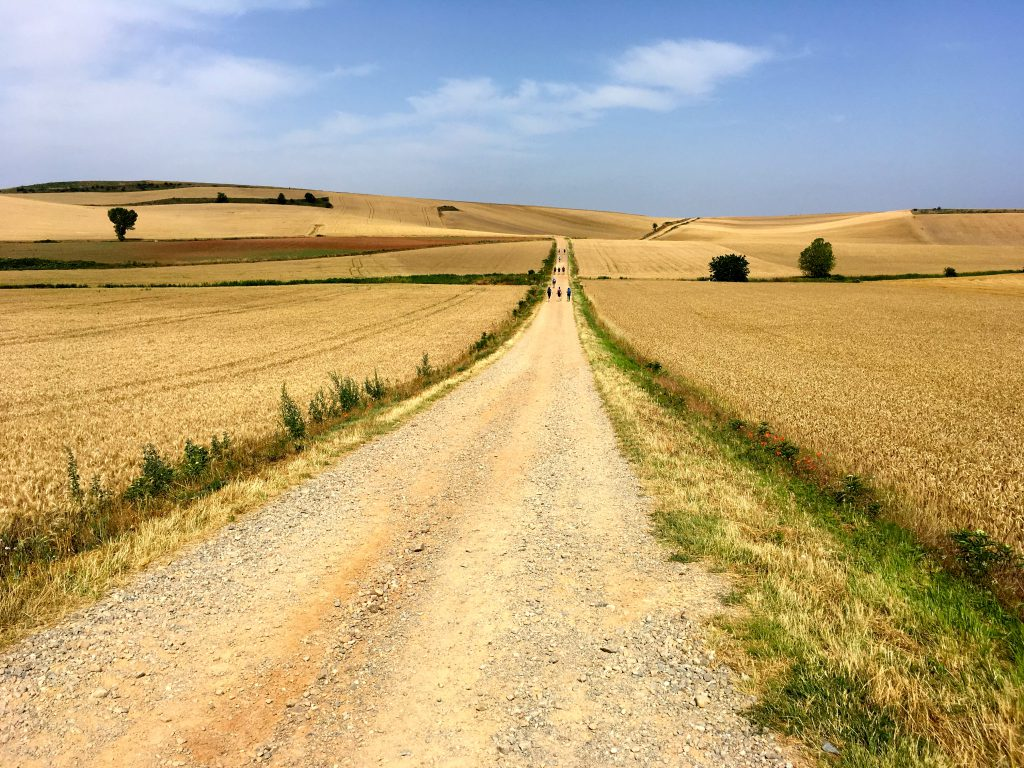 Golden fields across the Camino de Santiago